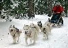 Dog sledding in Whitehorse