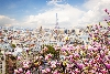 tn_201907050723520.Eiffel-tower-flowers.jpg