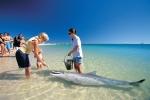 tn_202009161623410.Dolphin_experience-min.jpg