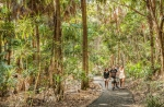 Mullumbimby is home to countless fantastic walking trails